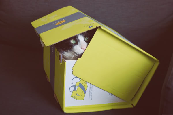 box with a cat inside