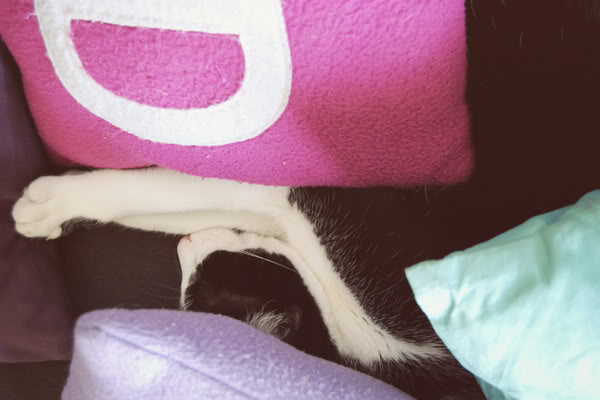 Batman cat sleeps under the cushions