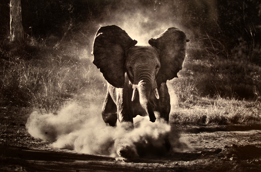 Sebastião Salgado GENESIS expo photos photographies Paris Hello it's Valentine Helloitsvalentine