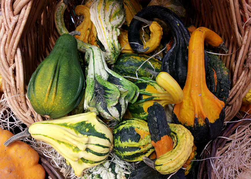 citrouilles pumpkins Hello it's Valentine Helloitsvalentine