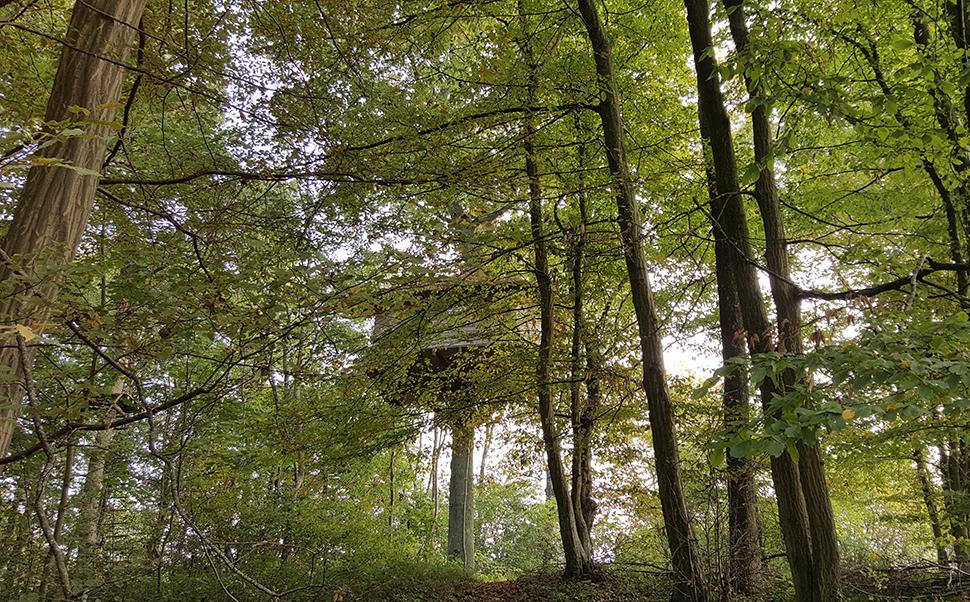 Helloitsvalentine_LeNidDanslArbre_cabane_Picardie_33