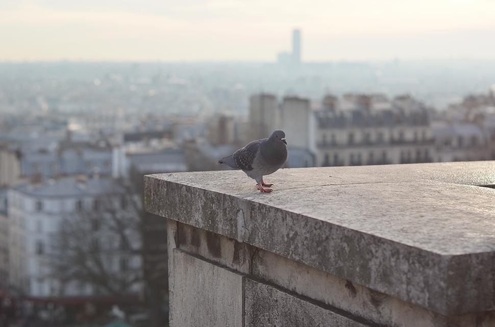 Helloitsvalentine_Montmartre_13